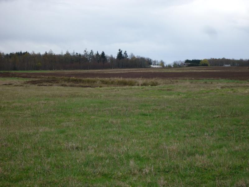 Bois , landes , tourbières et steppes de Chaumont d'Anjou (49) Dsc02617