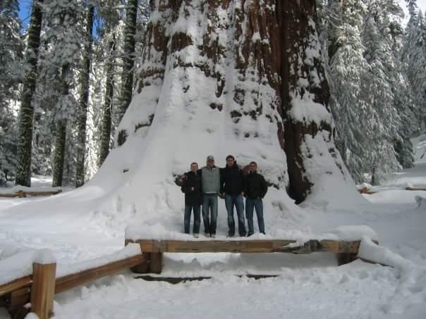 Sequoia gigante - info per coltivazione? Fb_img13