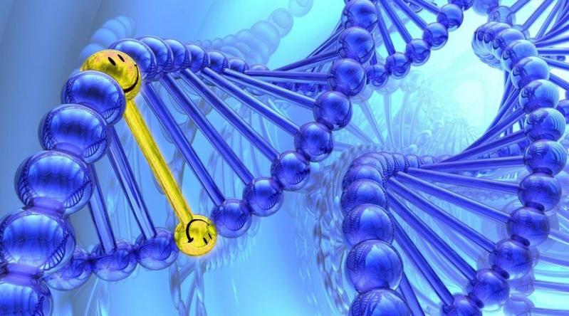Il existerait bien une prédisposition génétique au bonheur Gene-s10