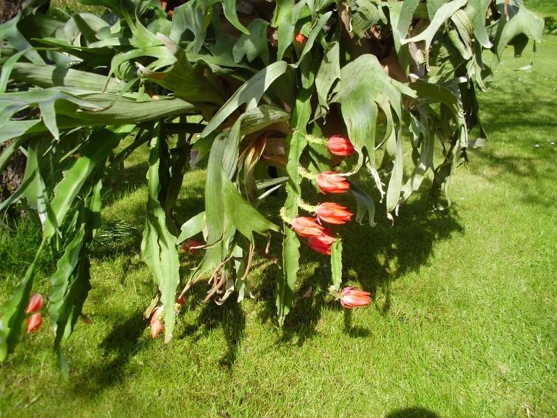 Zeigt her Eure ... Sporenpflanzen - Seite 6 03_05_14
