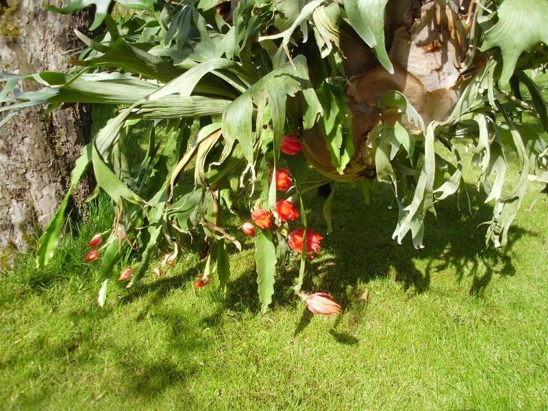 Zeigt her Eure ... Sporenpflanzen - Seite 6 03_05_16