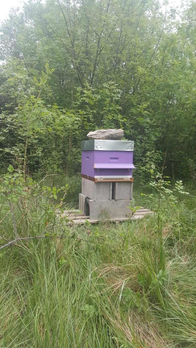 Visite au rucher de Nathalie Img_5610
