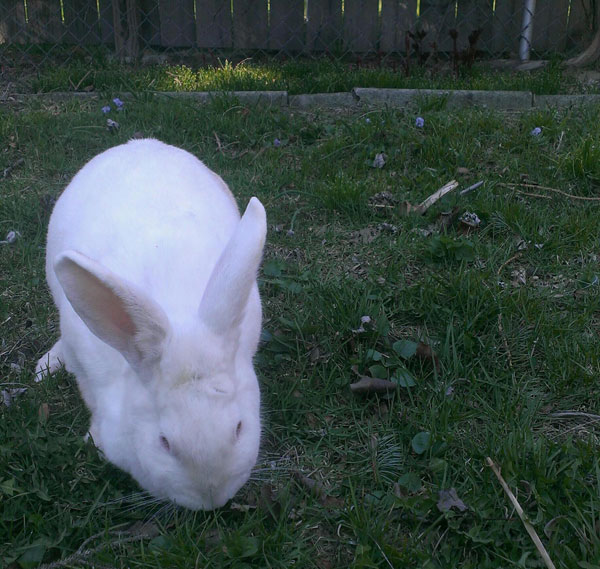 Assignment 9 - Rule of Thirds Photo due 4/14 Bunny10