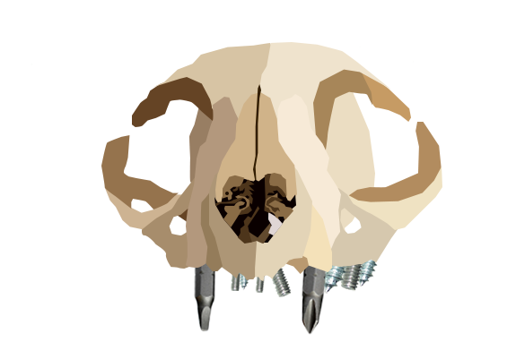 Assignment 10: Similar shapes due 4/19 Skull11
