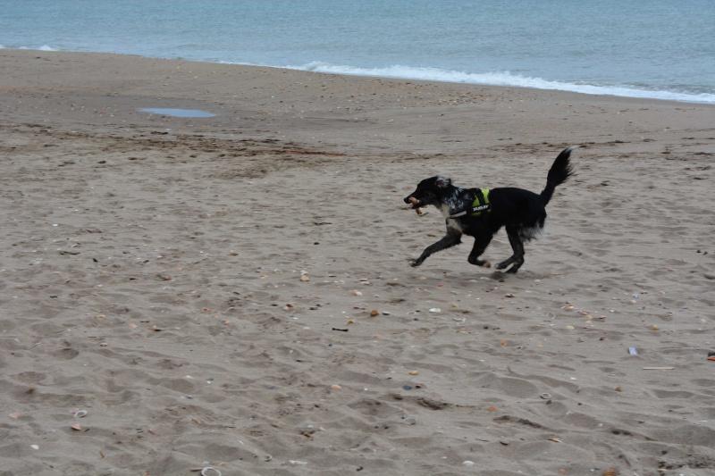 POGO (chien croisé berger) - Page 2 Dsc_7412