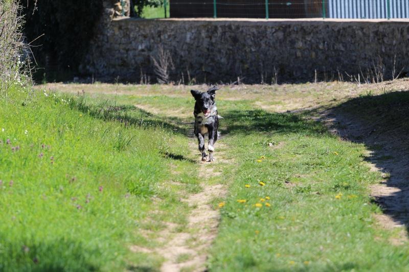 POGO (chien croisé berger) - Page 2 Img_7310