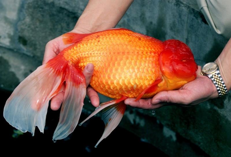 eau trouble et poisson mal en point Rtxl0010
