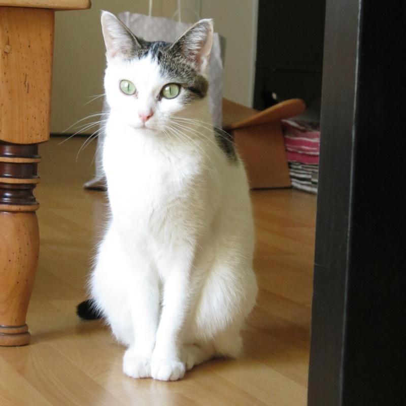 Jorelle, femelle type européen blanche tachetée de noir née le 1 novembre 2014 - Page 7 Img_4319