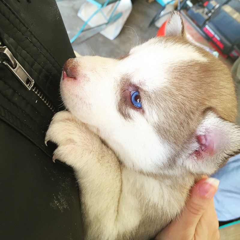 New puppy! Excited but multiple dog newbie Image11