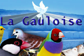 Club ornithologique de la Gauloise