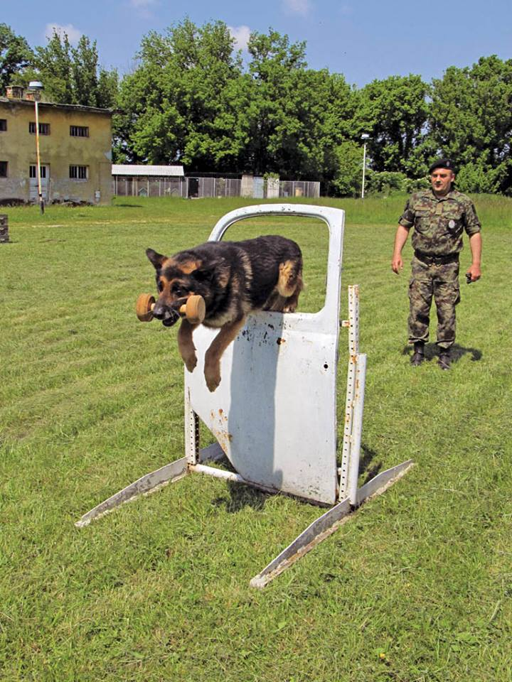 Serbian army multimedia - Page 9 Pas310
