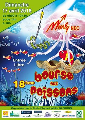 Bourse de Marly le 17 avril 2016 10322710