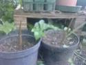 au jardin! P0405115