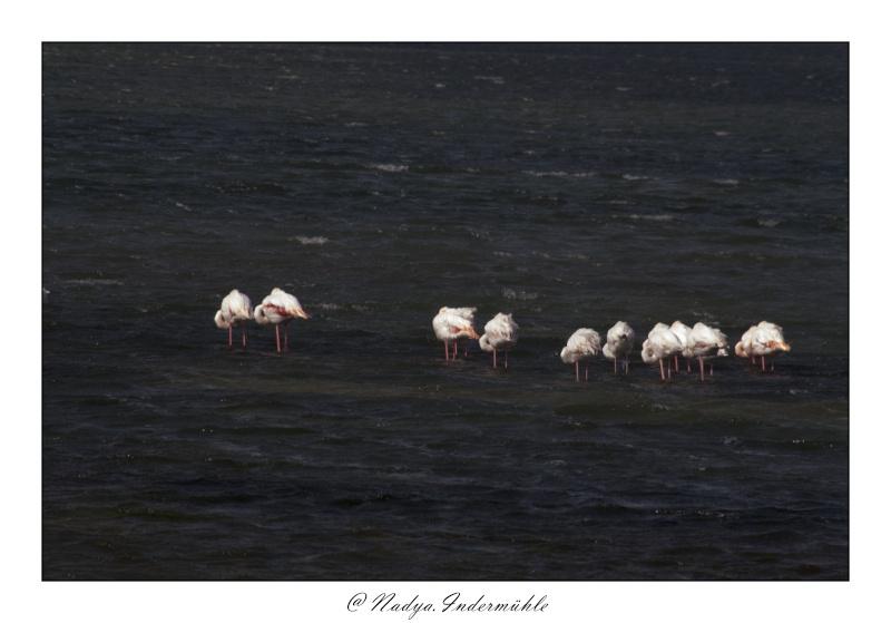 Gruissan, sa faune, et sa flore Cadr2011