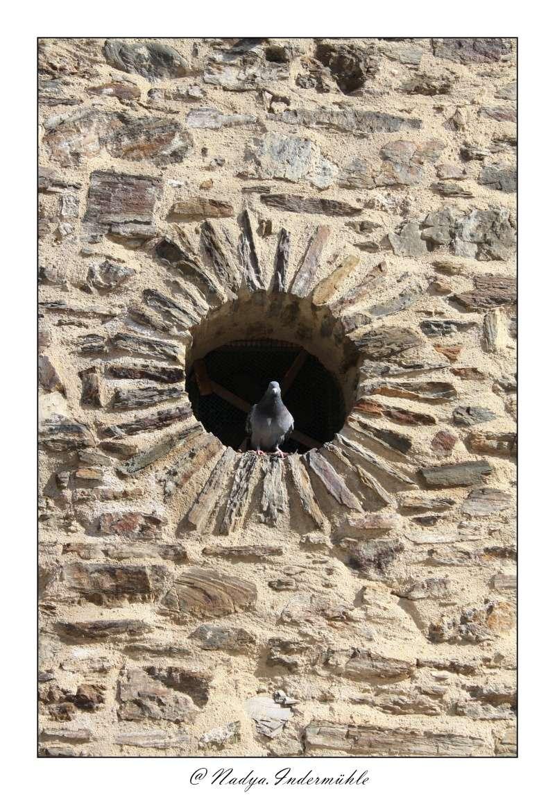 Collioure, petit coin de paradis - Page 2 Cadr2049