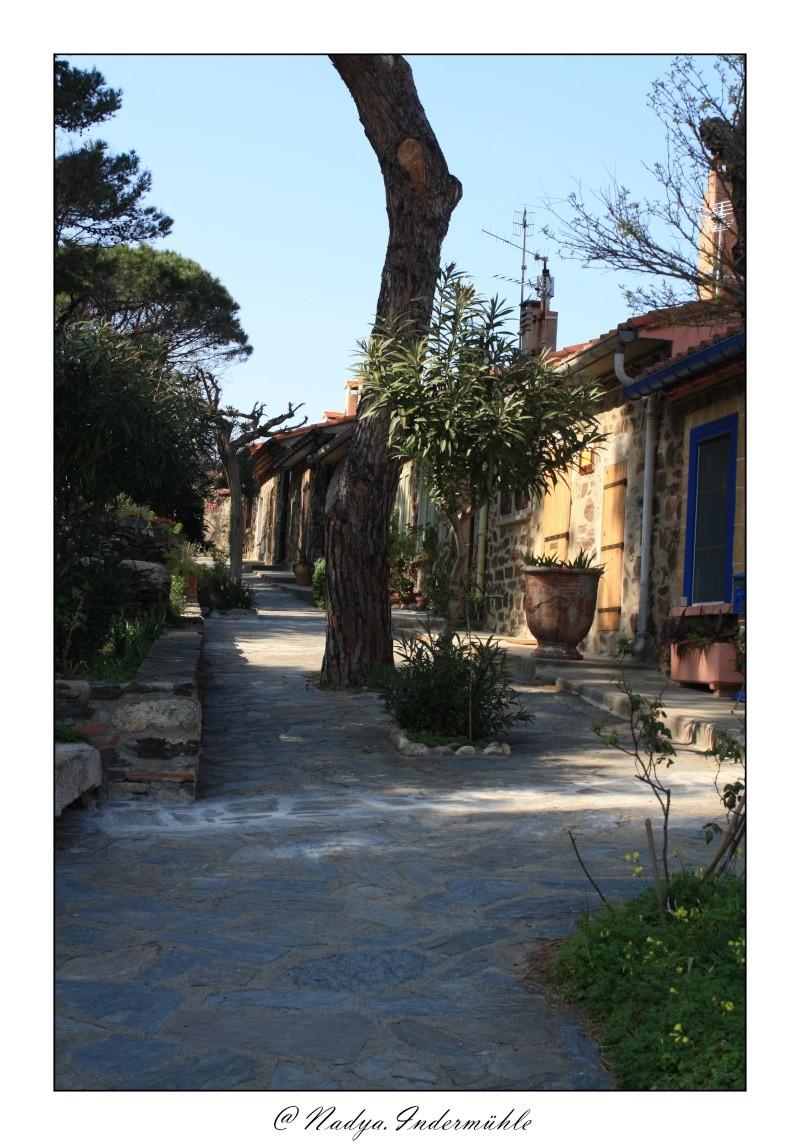 Collioure, petit coin de paradis - Page 2 Cadr2055