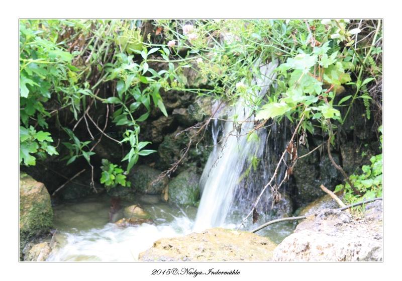 """Jardin des plantes, """"Les Capellans"""" St Cyprien - Page 3 Cadre121"""