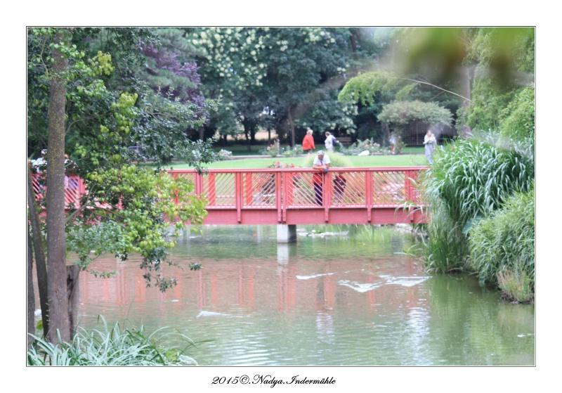 """Jardin des plantes, """"Les Capellans"""" St Cyprien - Page 3 Cadre122"""