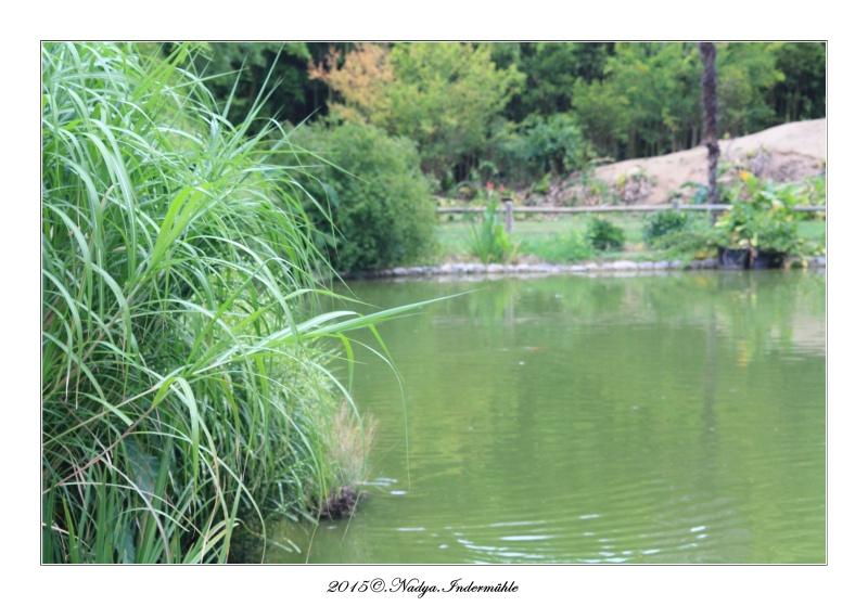 """Jardin des plantes, """"Les Capellans"""" St Cyprien Cadre149"""