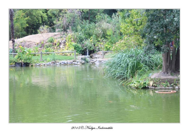 """Jardin des plantes, """"Les Capellans"""" St Cyprien Cadre150"""