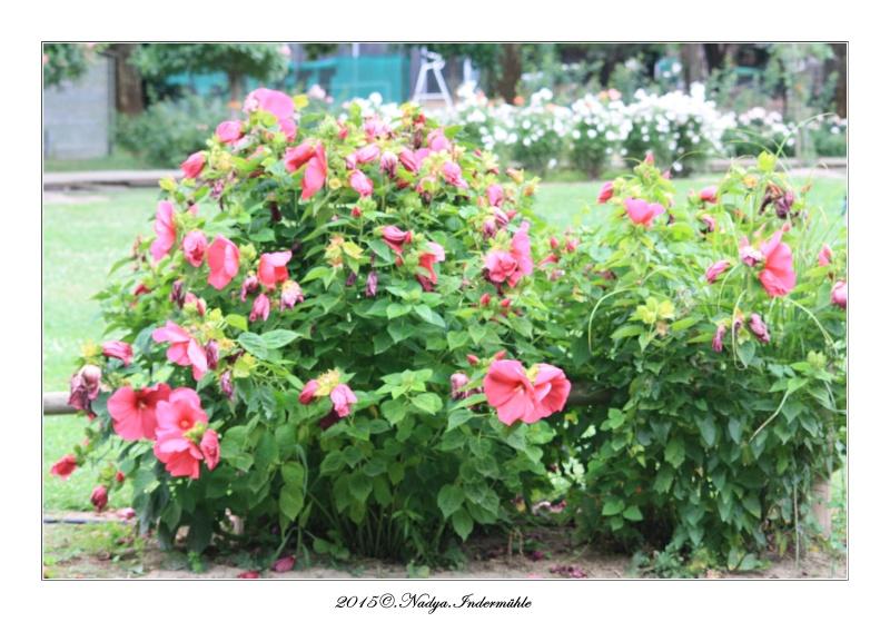 """Jardin des plantes, """"Les Capellans"""" St Cyprien Cadre159"""