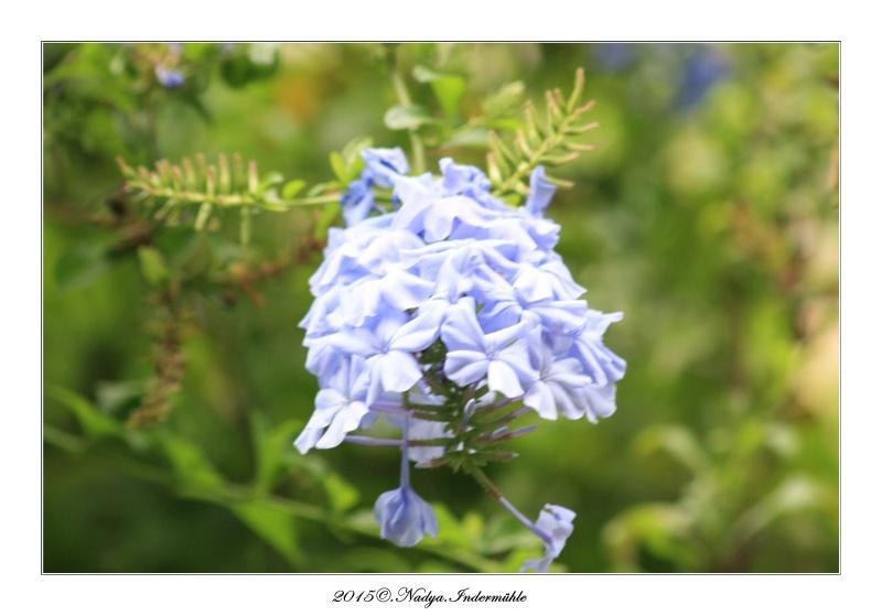"""Jardin des plantes, """"Les Capellans"""" St Cyprien Cadre160"""