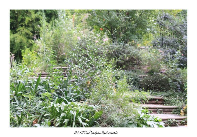 """Jardin des plantes, """"Les Capellans"""" St Cyprien Cadre217"""