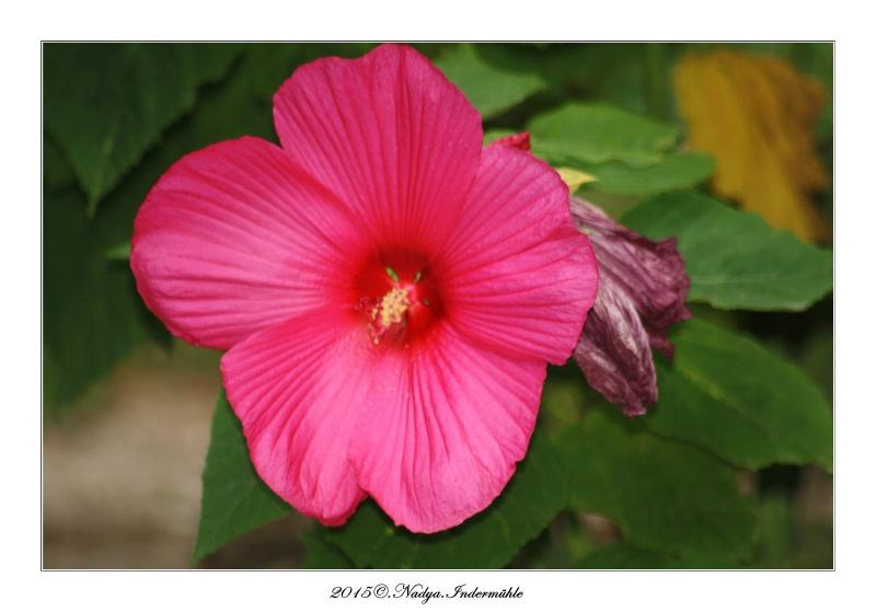 """Jardin des plantes, """"Les Capellans"""" St Cyprien Cadre226"""
