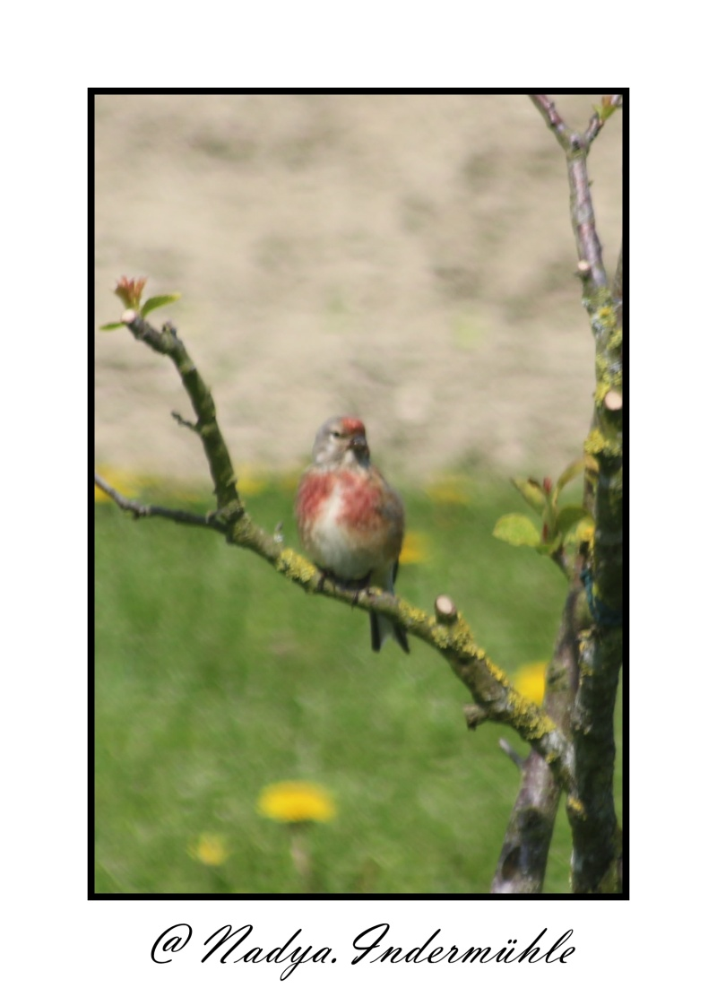 les oiseaux et petites bêtes au cours de nos balades Cadri215