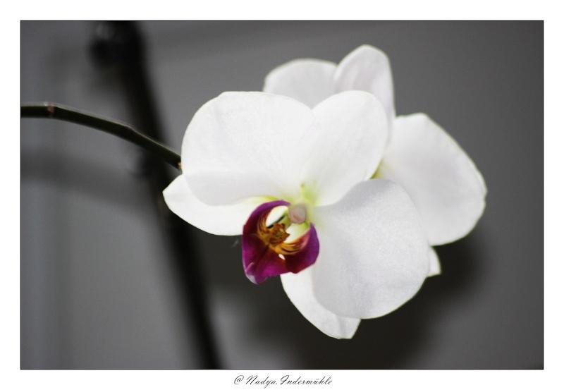 Les Orchidées Cadrim35