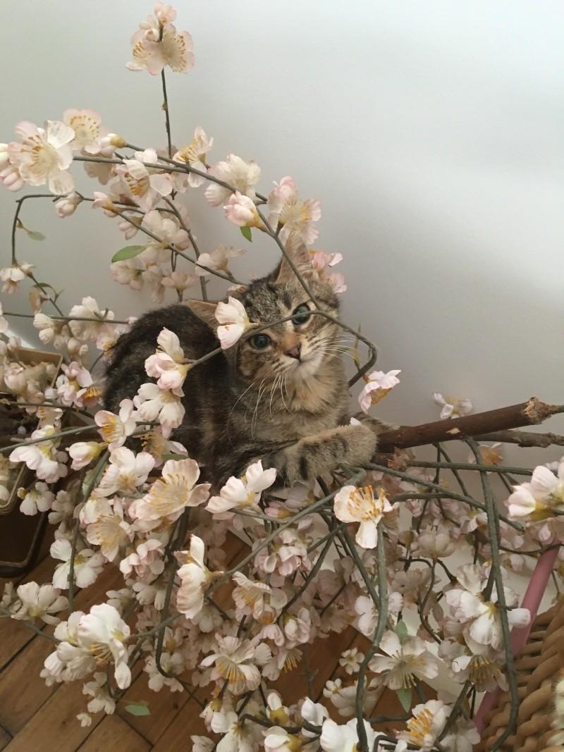 lalabelle - Lalabelle, petite tigrée adorable et espiège née le 01/01/2016 Img_2121