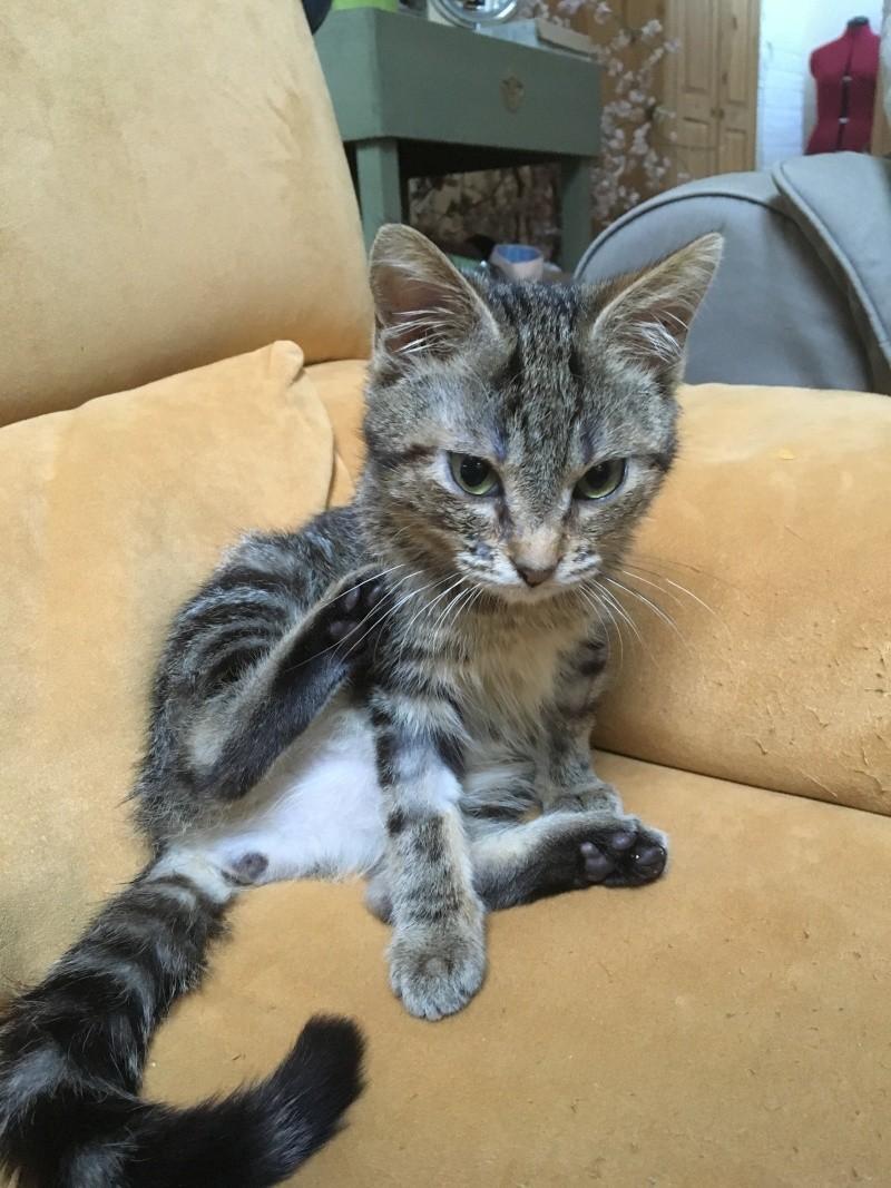 lalabelle - Lalabelle, petite tigrée adorable et espiège née le 01/01/2016 Img_2123