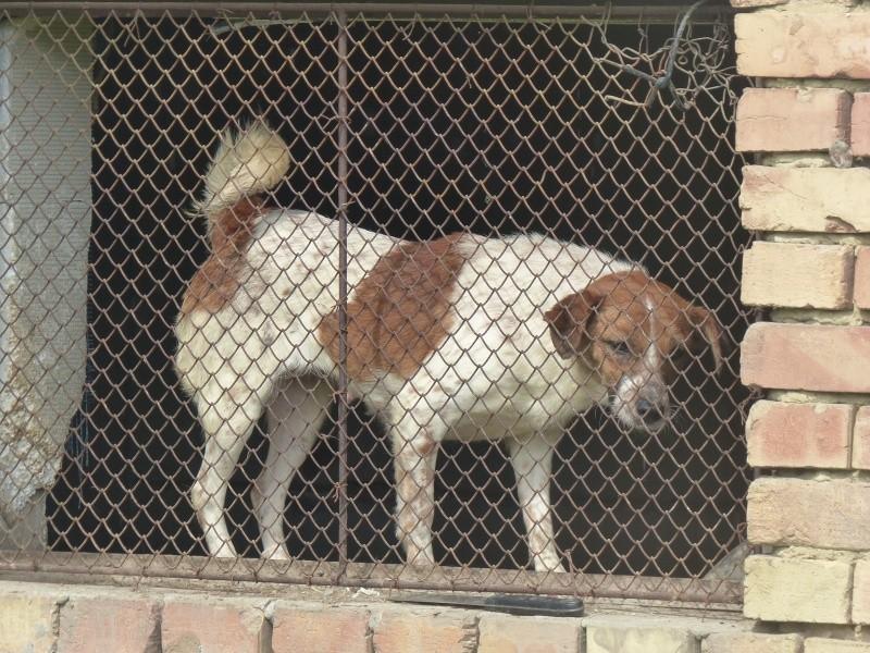 chien94 - CARAMELLE, F-X petite 10kg, née 2014 env (SERBIE/Pension GORDANA) PRETE A VOYAGER Cara_410