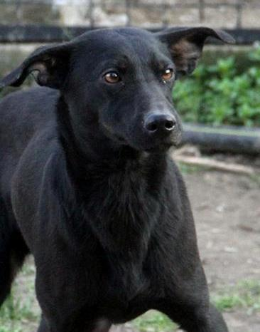 Parrainage tests sanguins et pensions refuge de Backa  et chiens prêts à partir sans solution - Page 3 Kristy13