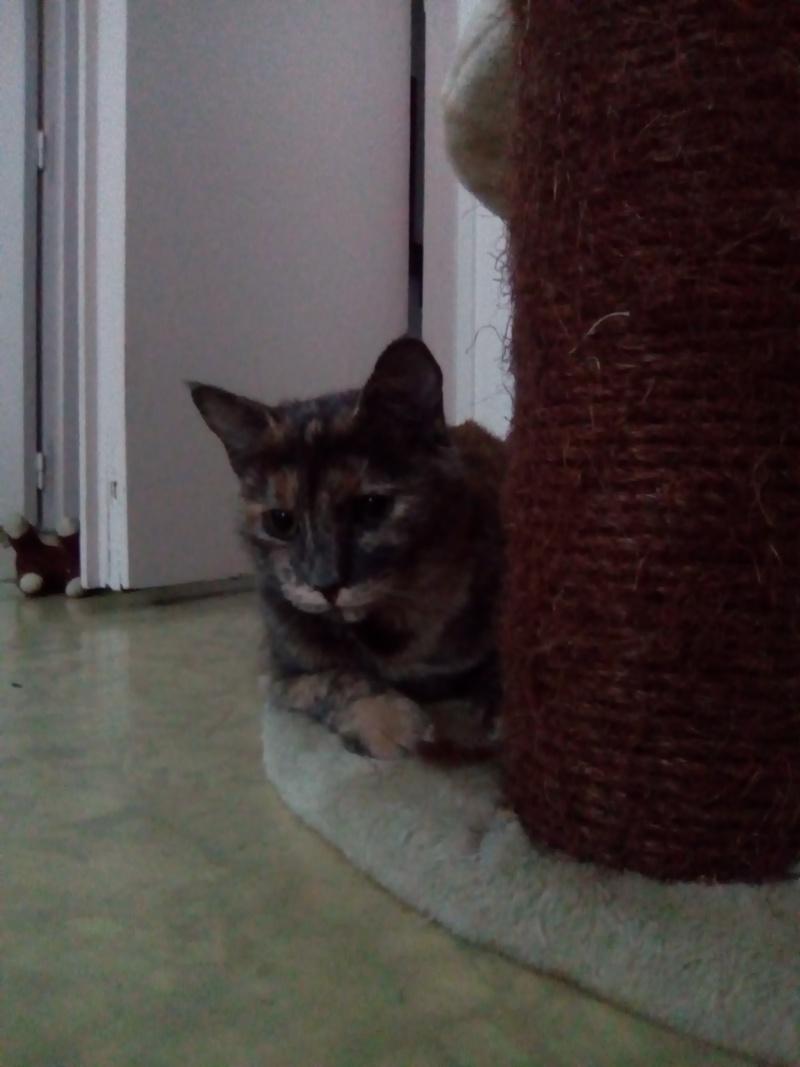 quelques nouvelles de lilou (daisy) adoptée Img_2010