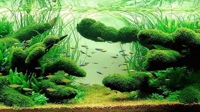 Lancement d'un bac 300l Aquascaping [Nowis06] - Page 4 Aquasc10