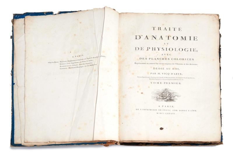 Ecrit et croquis du Médecin Vicq d'Azir 14622510