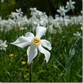 histoire de fleurs 2012-010