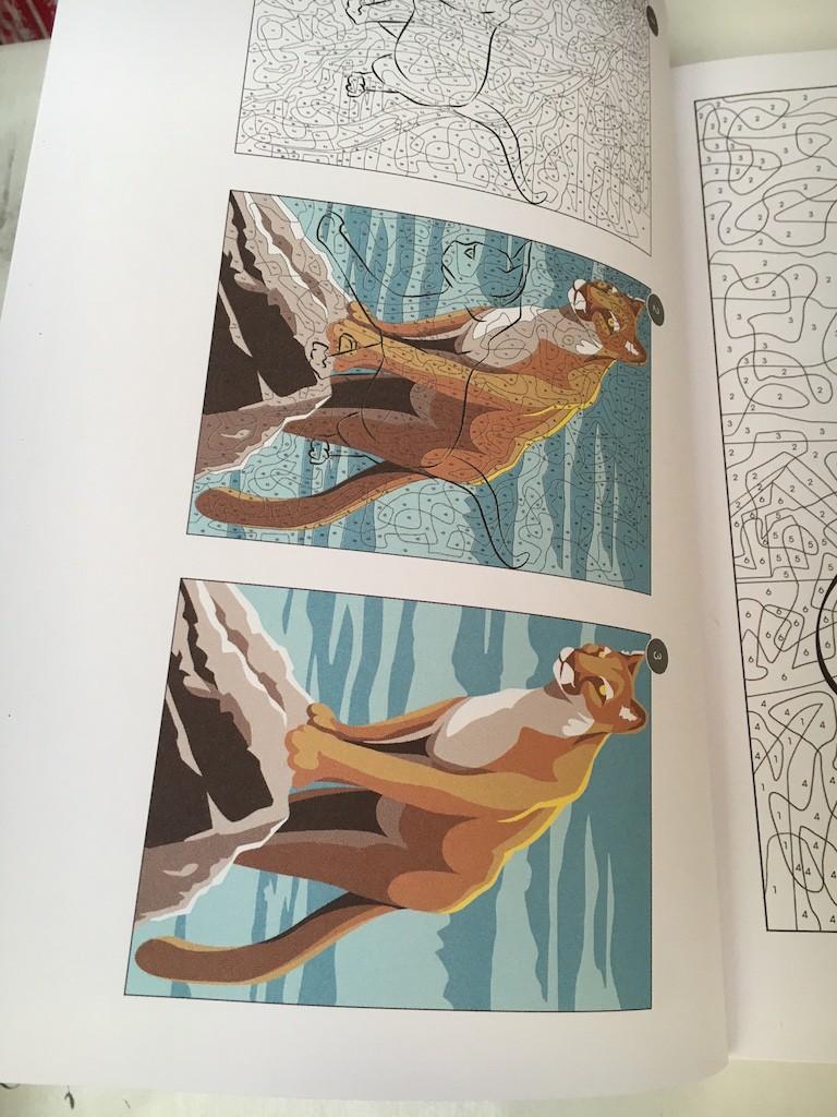 Vice versa : un nouveau magazine de coloriage mystère - Page 2 Img_9321