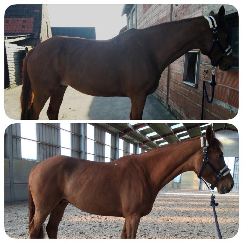 On juge vos chevaux au modèle - Page 5 Image14