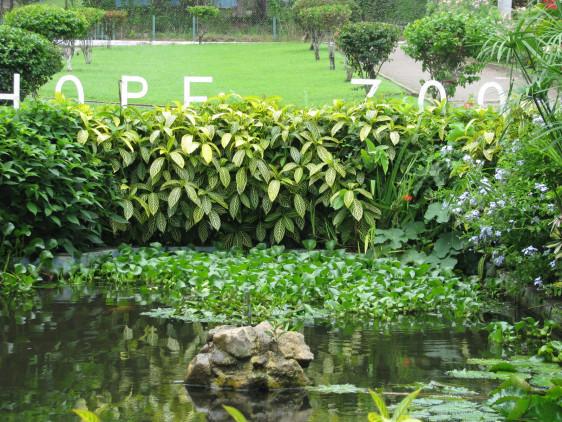 Worth more than gold: Jamaica's Botantical Gardens Hope-z10