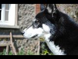 Quelques photos de mon petit loup.  Hera_510