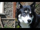 Quelques photos de mon petit loup.  Hera_610