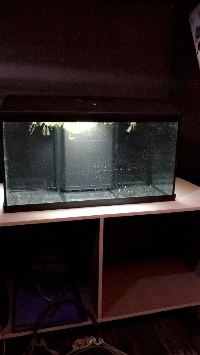 Nouvel aqua : 60L Img_3310