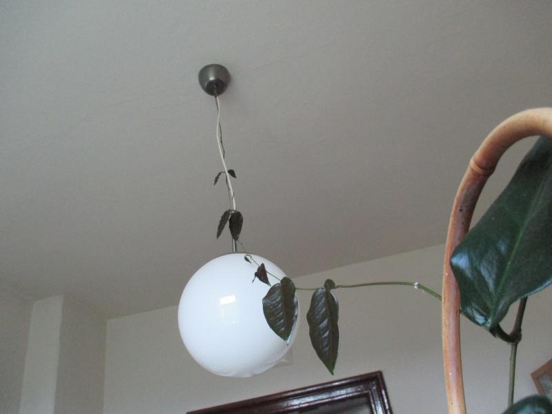 Hoyas sind sehr eigenständig und erfindungsreich Img_0710