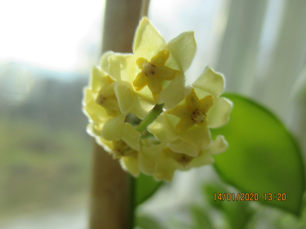 Blüten 2020 Img_1515