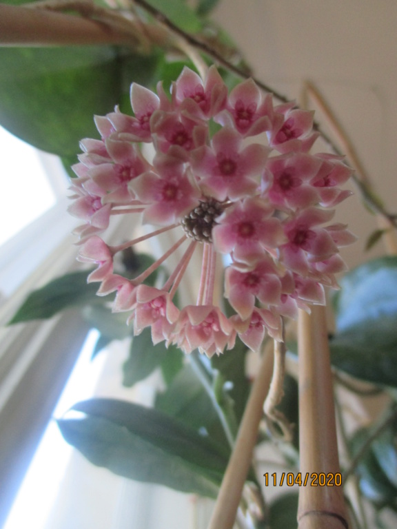 Blüten 2020 Img_1914