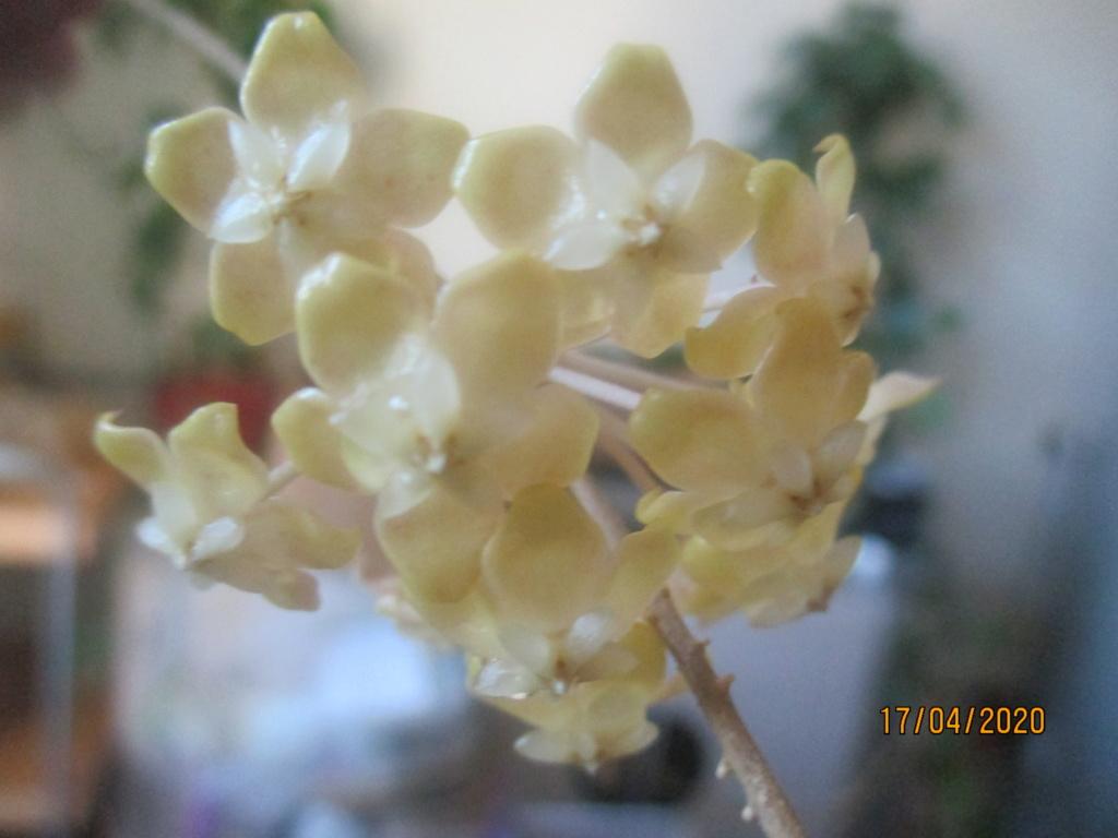 Blüten 2020 Img_2116