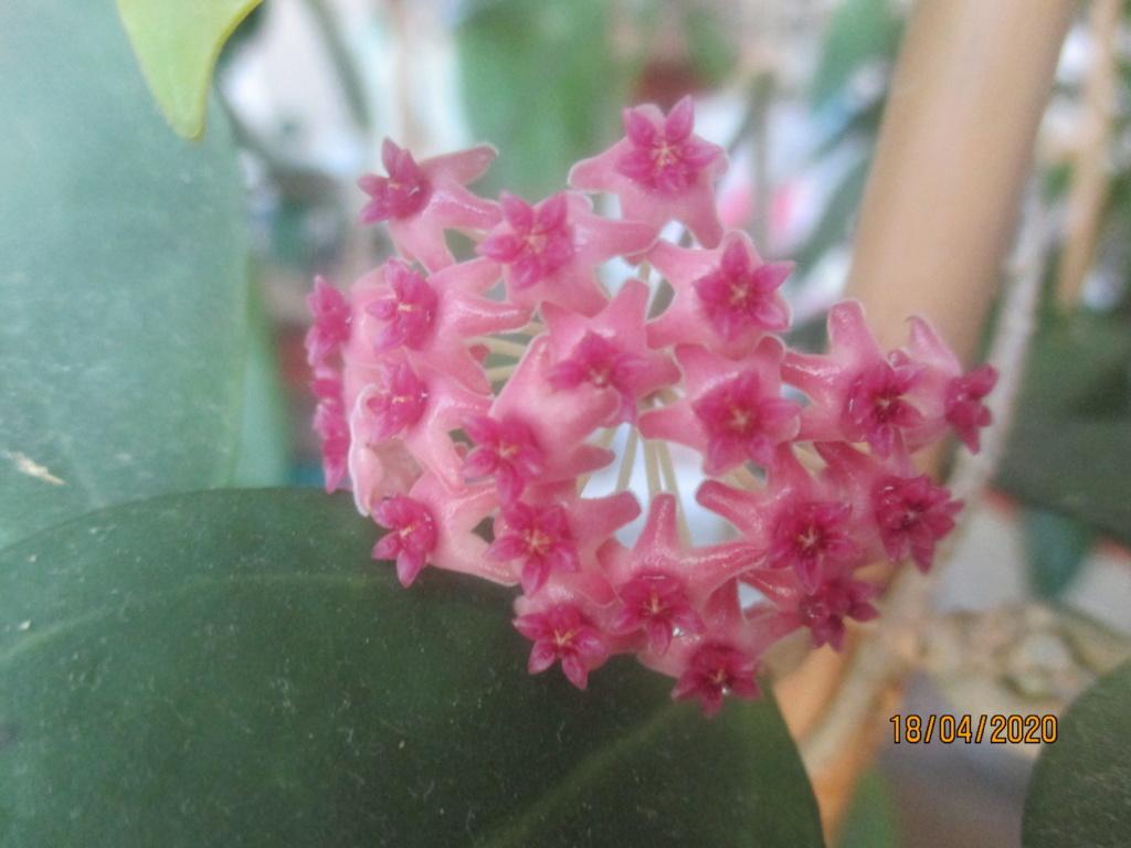Blüten 2020 Img_2117