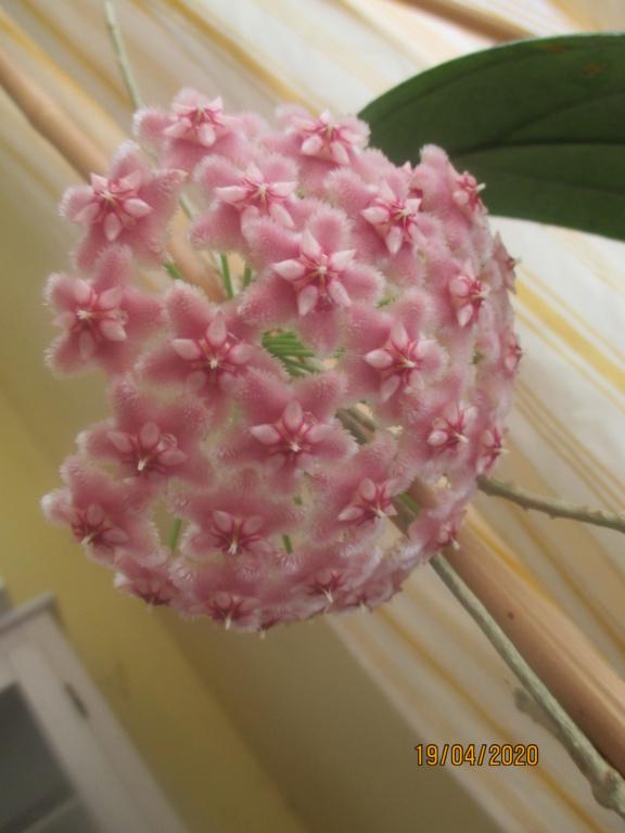 Blüten 2020 Img_2118